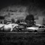 Graveyard For Old, White Horses