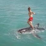 Shark Surfing!